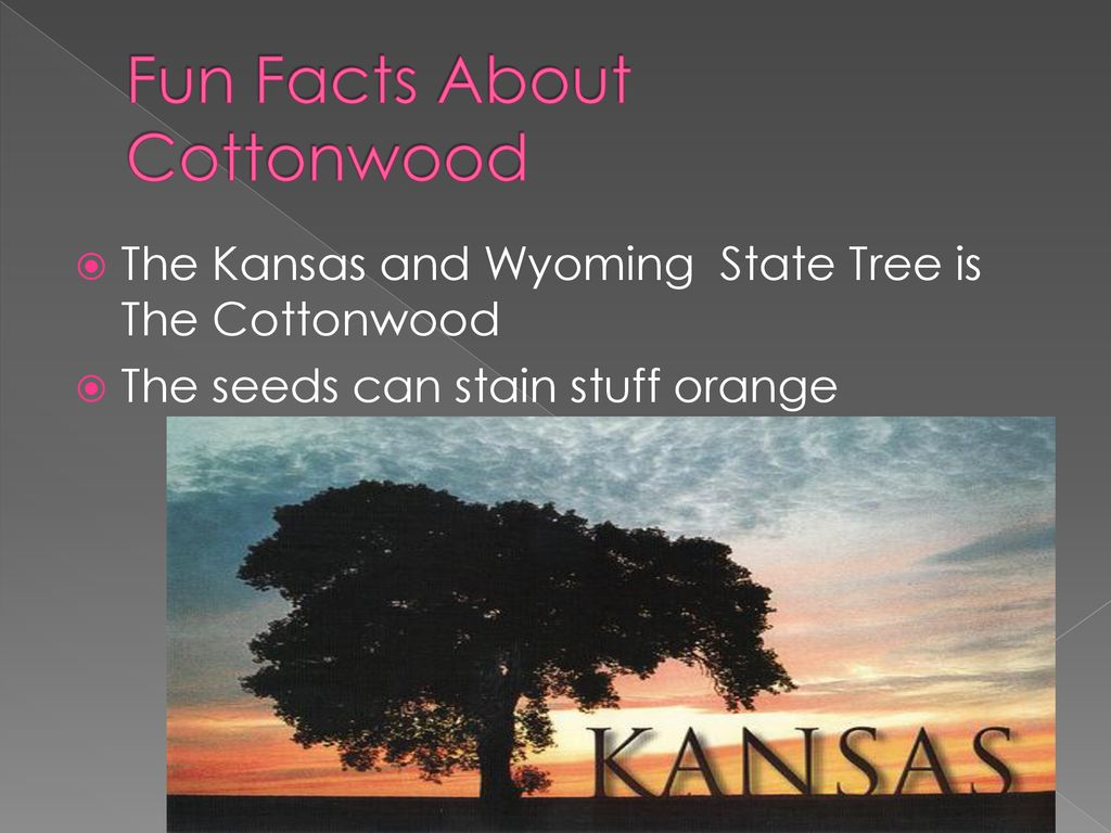 Cottonwood By Grace Friday 13th  - ppt download