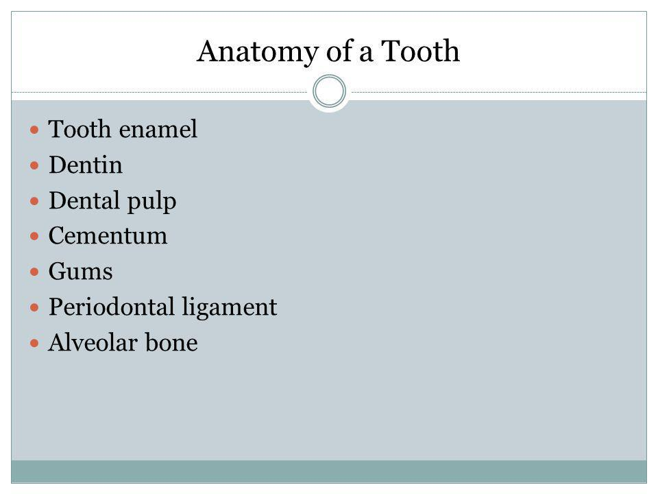 Anatomy of a Tooth Tooth enamel Dentin Dental pulp Cementum Gums
