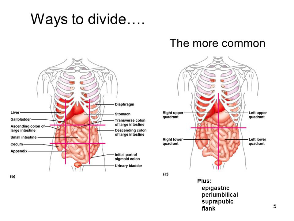 Ways to divide…. The more common Plus: epigastric periumbilical