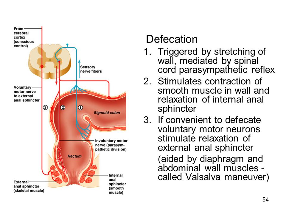 Defecation Triggered by stretching of wall, mediated by spinal cord parasympathetic reflex.