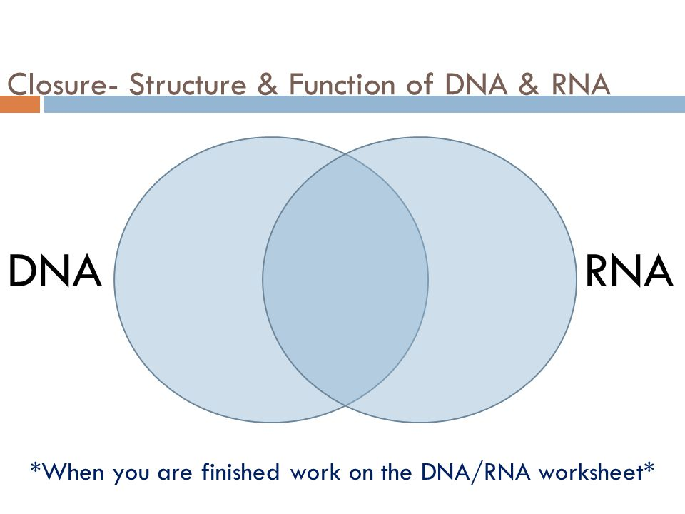 Bellwork Obj SWBAT Compare Contrast DNA With RNA Ppt