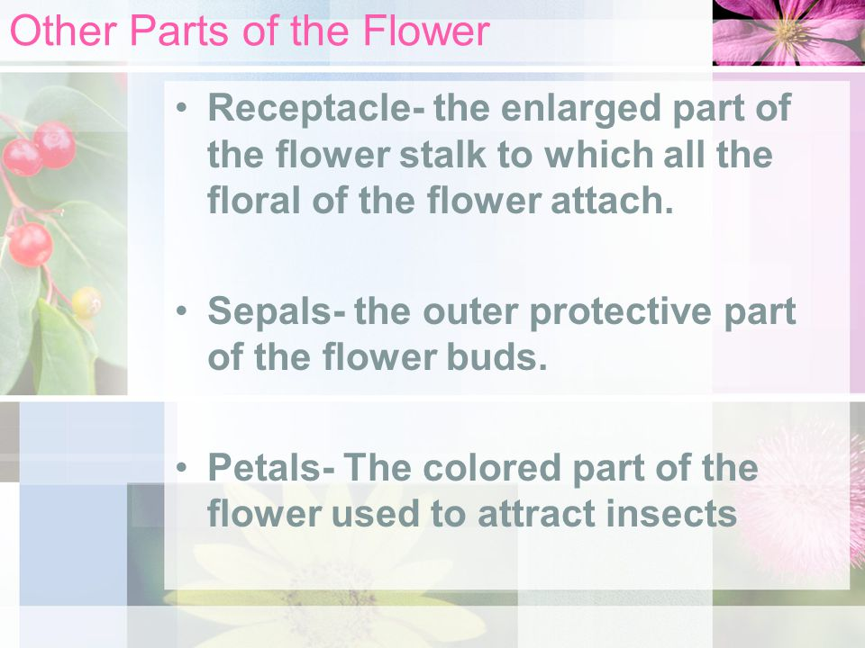 Other Parts of the Flower