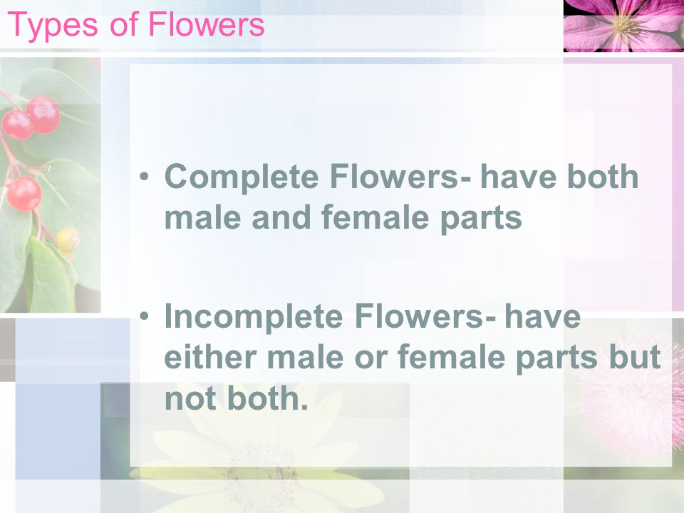 Types of Flowers Complete Flowers- have both male and female parts.
