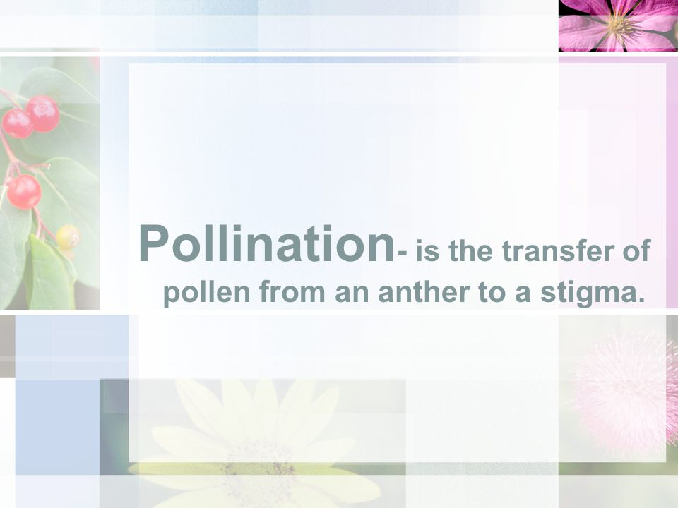 Pollination- is the transfer of pollen from an anther to a stigma.
