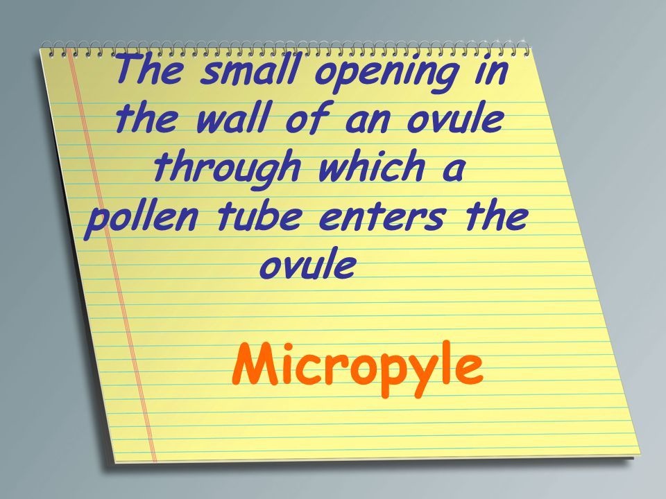 The small opening in the wall of an ovule through which a pollen tube enters the ovule