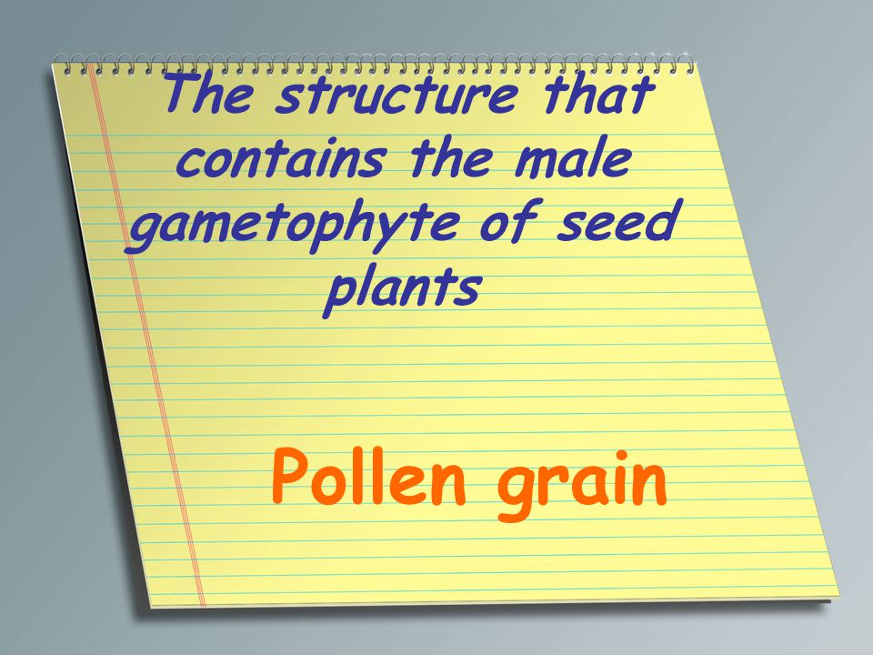 The structure that contains the male gametophyte of seed plants