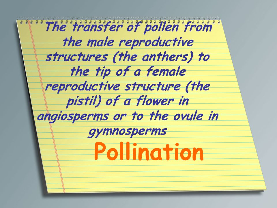 The transfer of pollen from the male reproductive structures (the anthers) to the tip of a female reproductive structure (the pistil) of a flower in angiosperms or to the ovule in gymnosperms