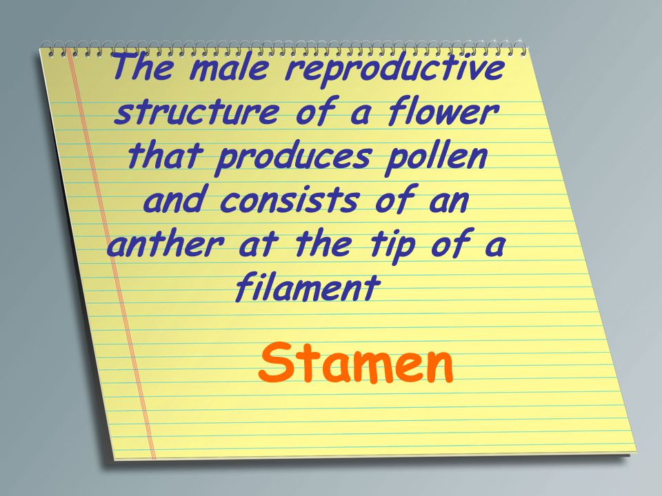 The male reproductive structure of a flower that produces pollen and consists of an anther at the tip of a filament