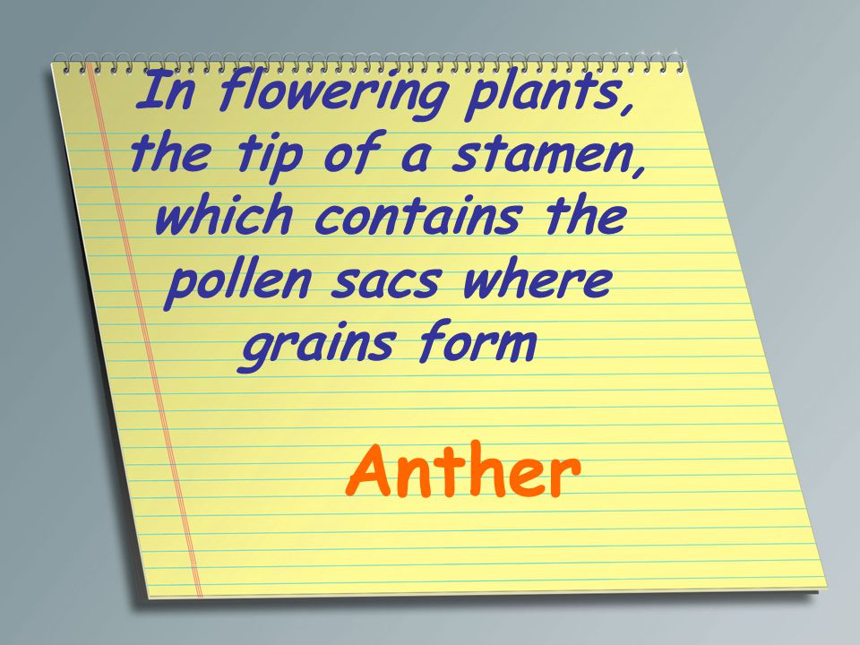 In flowering plants, the tip of a stamen, which contains the pollen sacs where grains form