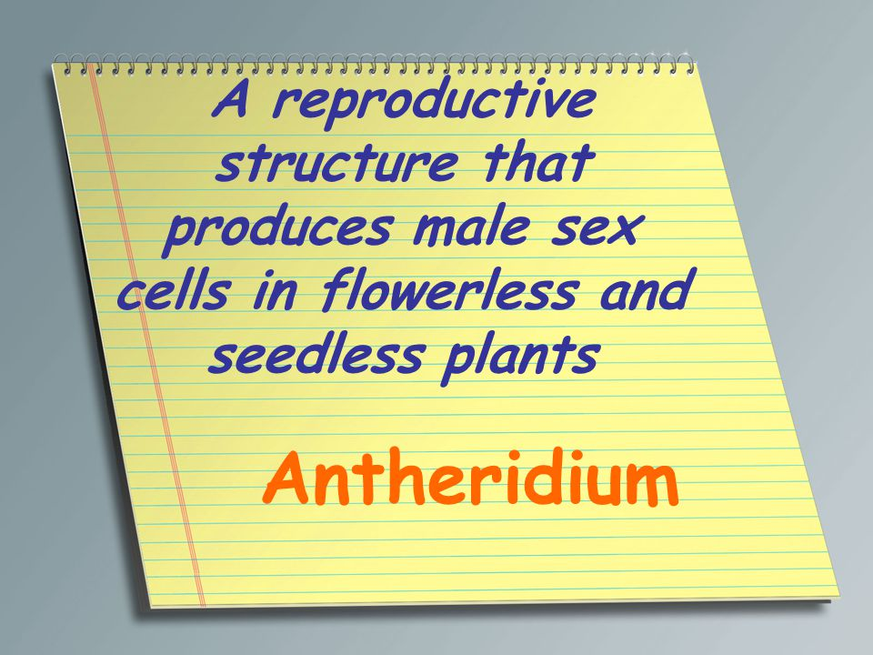 A reproductive structure that produces male sex cells in flowerless and seedless plants