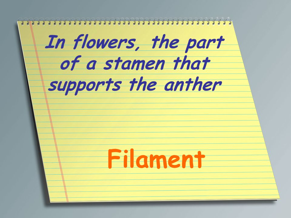 In flowers, the part of a stamen that supports the anther