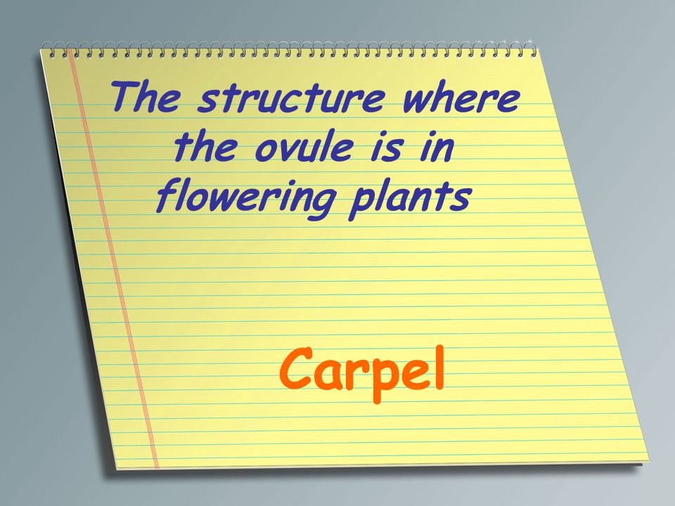 The structure where the ovule is in flowering plants