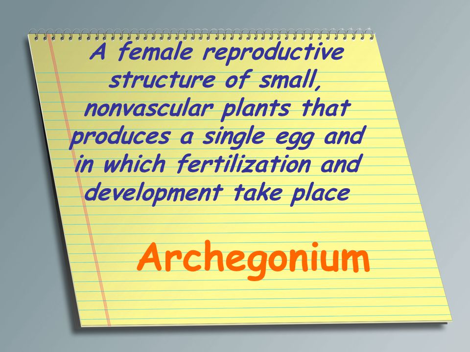 A female reproductive structure of small, nonvascular plants that produces a single egg and in which fertilization and development take place