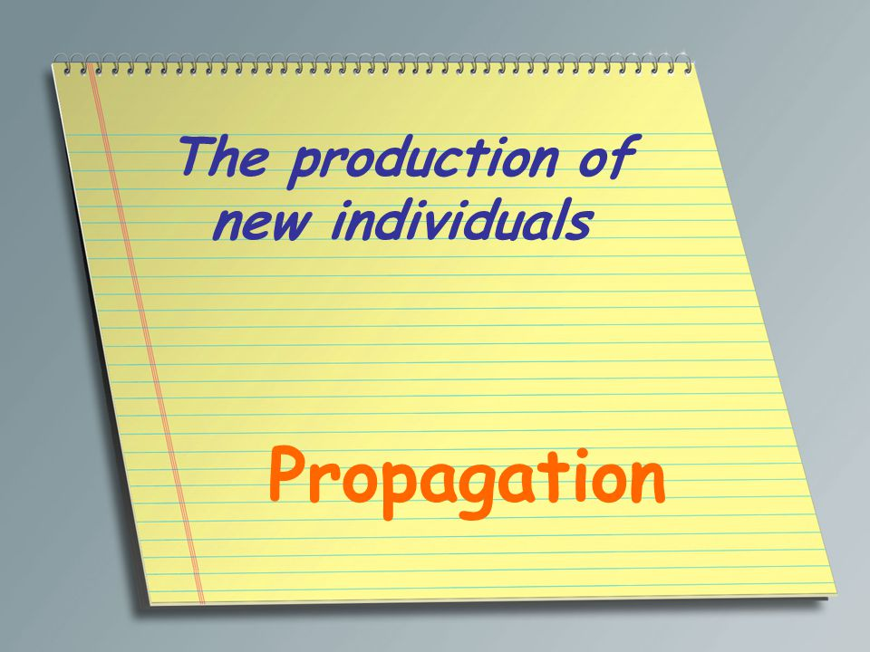 The production of new individuals