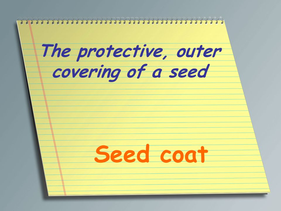 The protective, outer covering of a seed