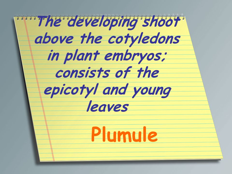 The developing shoot above the cotyledons in plant embryos; consists of the epicotyl and young leaves