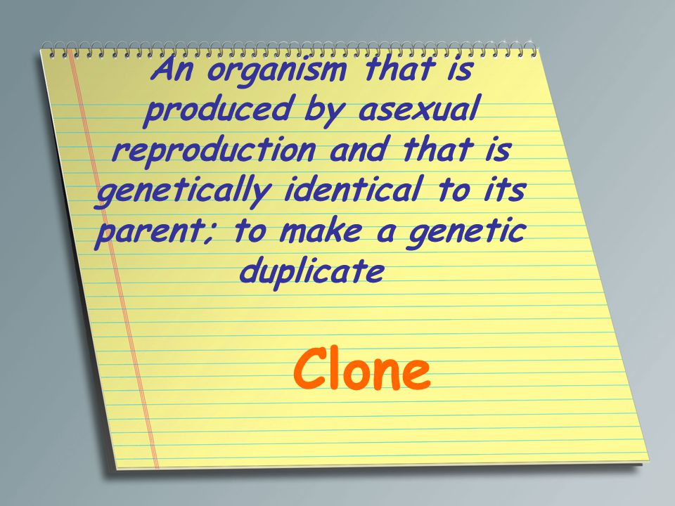 An organism that is produced by asexual reproduction and that is genetically identical to its parent; to make a genetic duplicate