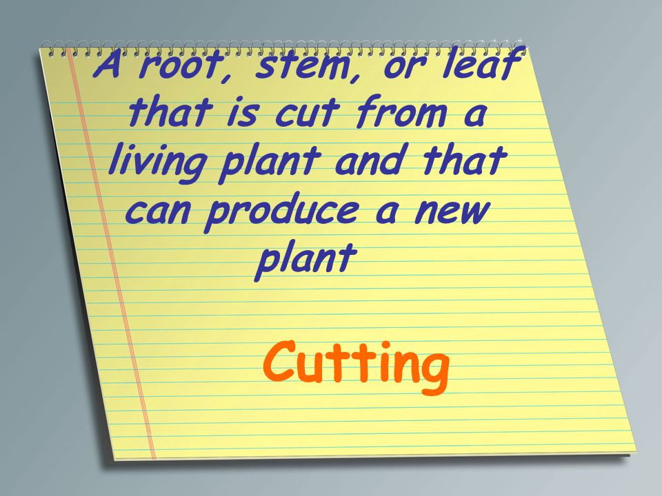 A root, stem, or leaf that is cut from a living plant and that can produce a new plant
