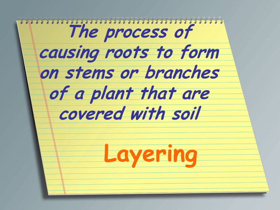 The process of causing roots to form on stems or branches of a plant that are covered with soil
