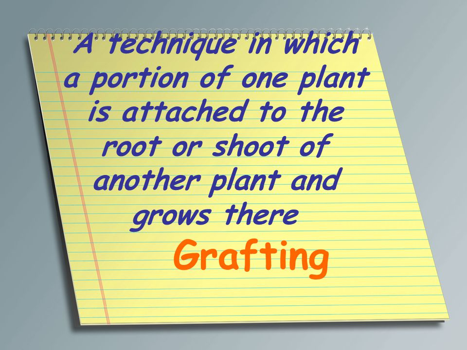 A technique in which a portion of one plant is attached to the root or shoot of another plant and grows there