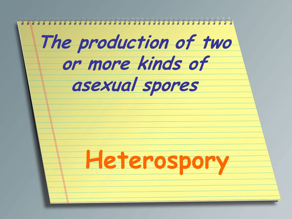 The production of two or more kinds of asexual spores