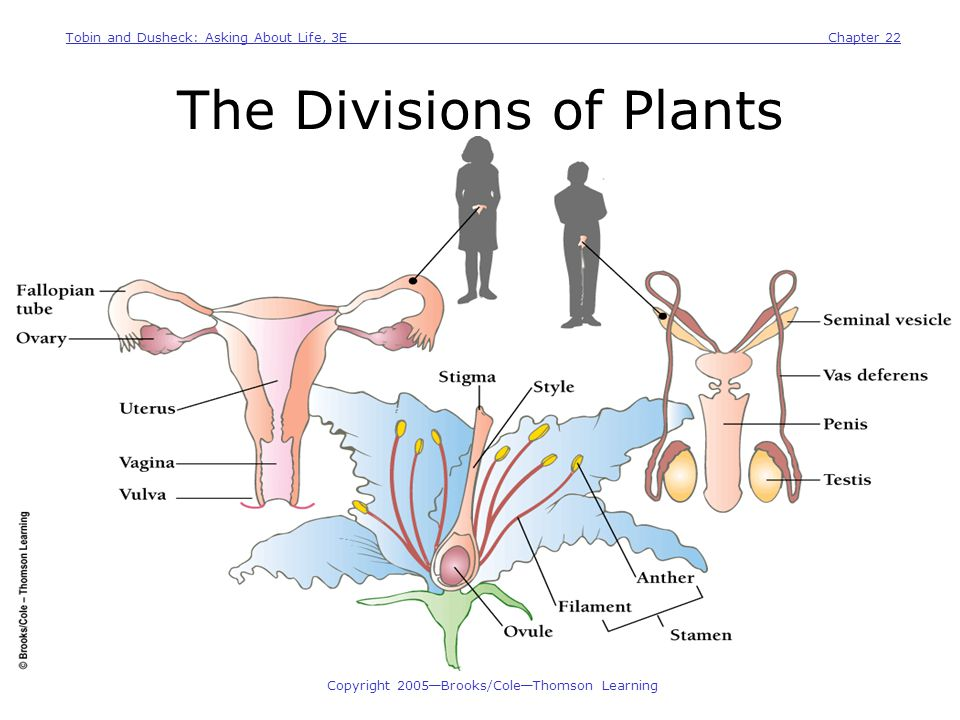 The Divisions of Plants