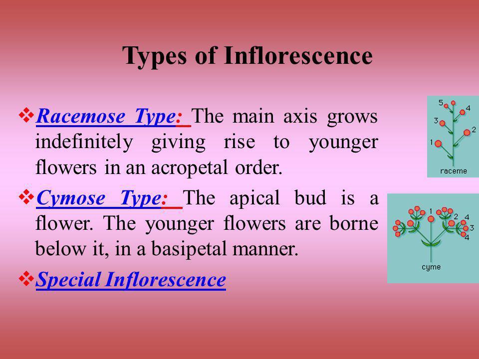 Flower Arrangement On Floral Axis Inflorescence Ppt Video Online