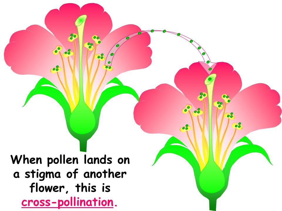 Diagram Of Cross Pollination Diy Enthusiasts Wiring Diagrams