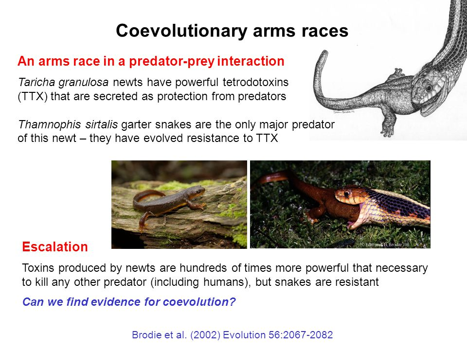 Species interactions. Ppt download.