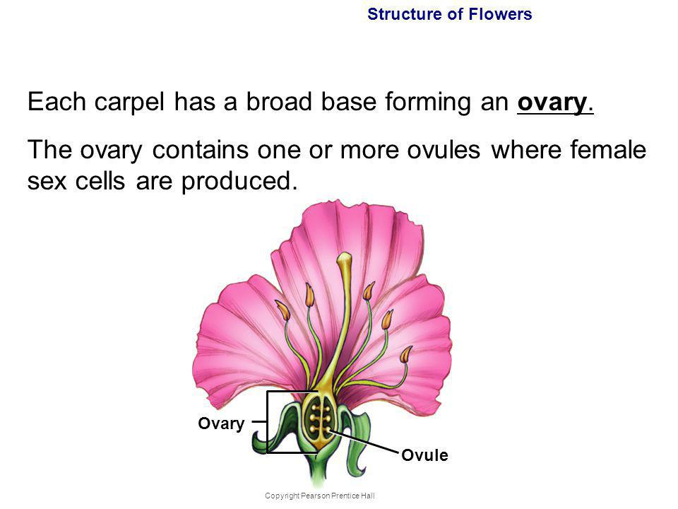 Reproduction Of Flower Plants Watch Video Below Ppt Download