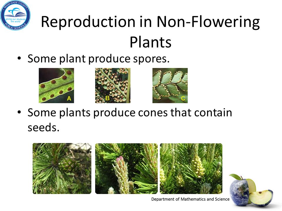 Sexual reproduction in non flowering plants