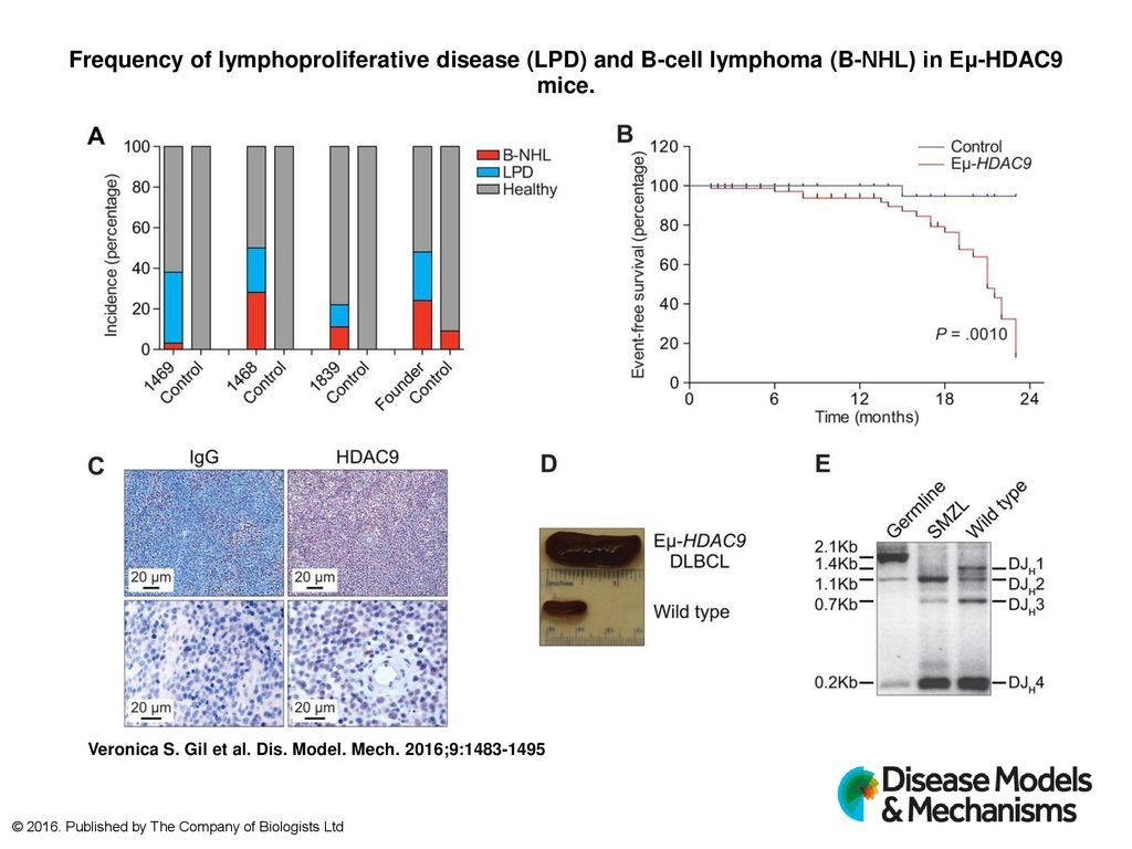 Frequency of lymphoproliferative disease (LPD) and B-cell
