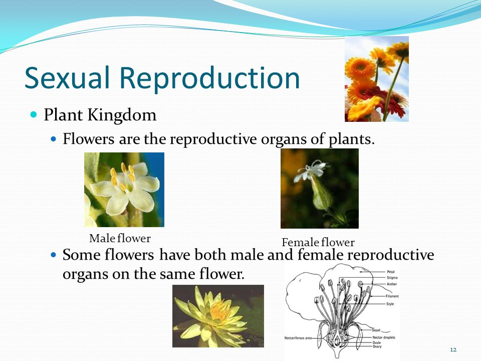 Plant sexual reproductive system