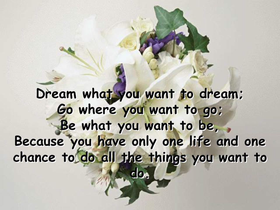 Dream what you want to dream;