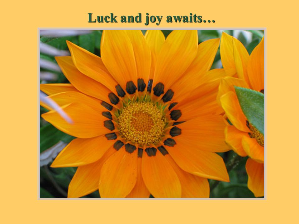 Luck and joy awaits…