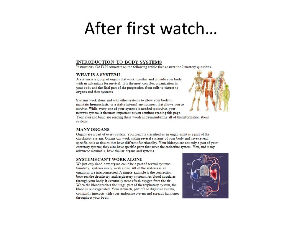Lesson Plan Do Now Share 8 Min Human Body Video Reading 15 Ppt Download