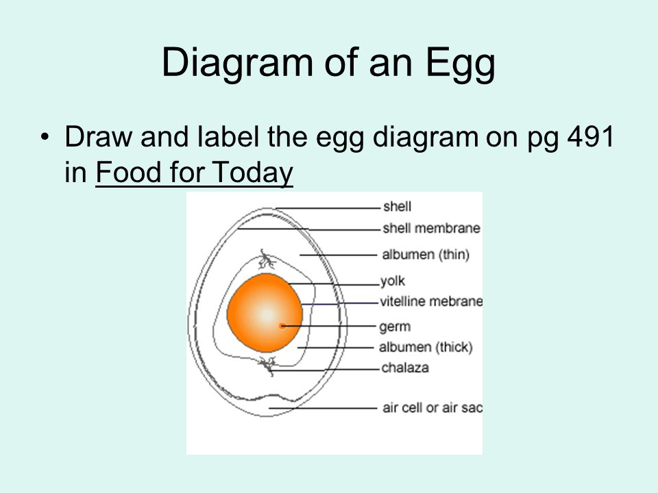 Important Facts About Eggs Ppt Video Online Download