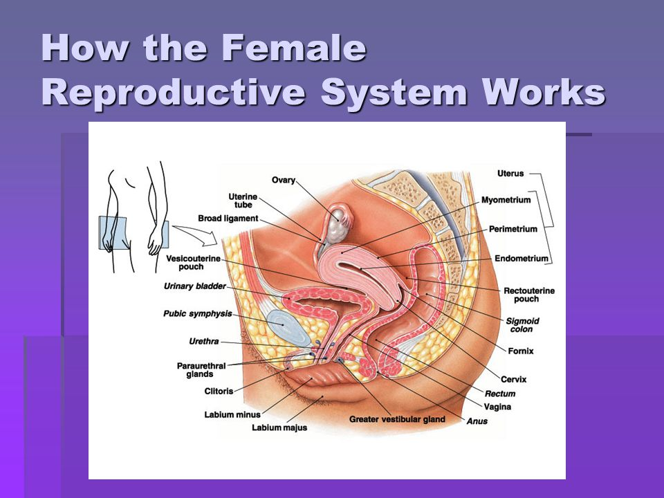 reproductive system module About myaccess if your institution subscribes to this resource, and you don't have a myaccess profile, please contact your library's reference desk for information on how to gain access to this resource from off-campus.