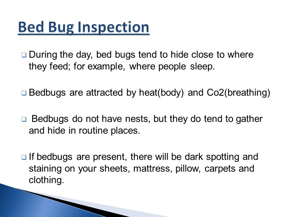 how to know if bedbugs are present