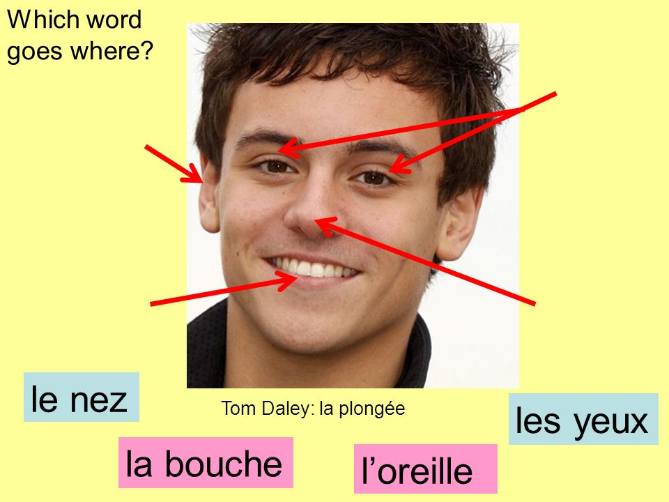 le nez les yeux la bouche l'oreille Which word goes where