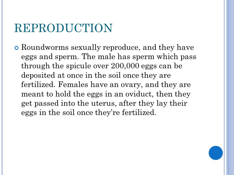 Ascaris asexual reproduction worksheet