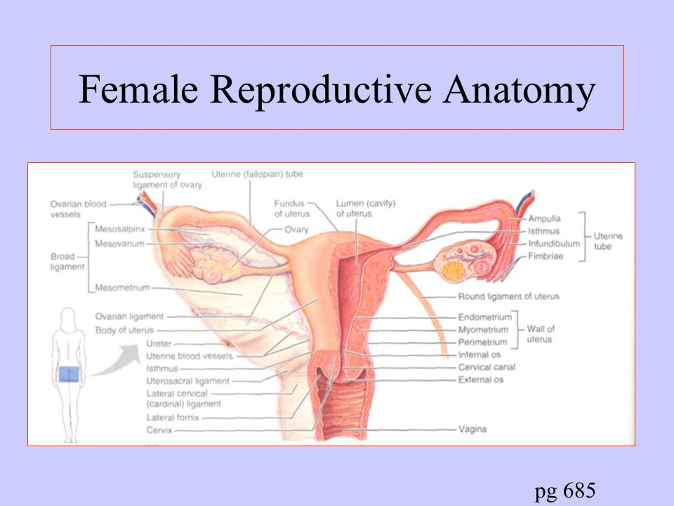Reproductive Organs And System Ppt Video Online Download