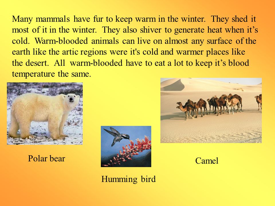 Cold-blooded Vs Warm-blooded By:Ehsaan. - ppt video online download