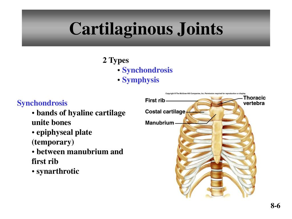 Chapter 8 Joints Of The Skeletal System Ppt Download A temporary form of joint called an epiphyseal (growth) plate, is one where the cartilage is. chapter 8 joints of the skeletal system