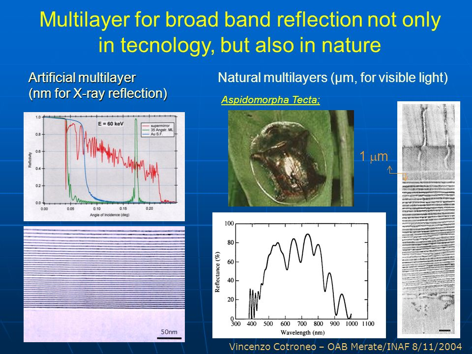 Multilayer for broad band reflection not only in tecnology, but also in nature