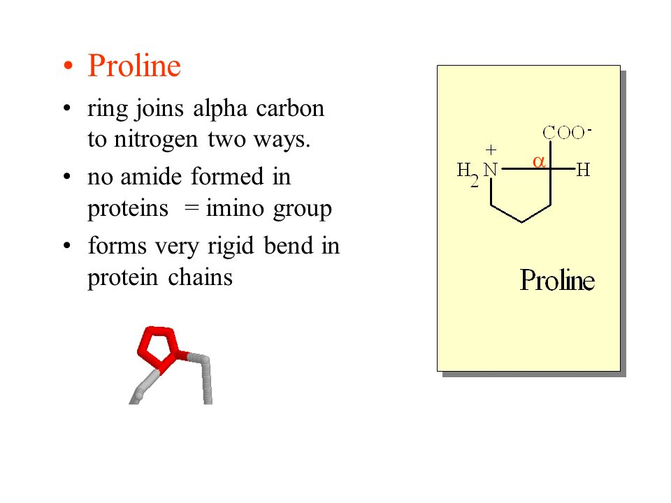 Proline ring joins alpha carbon to nitrogen two ways.