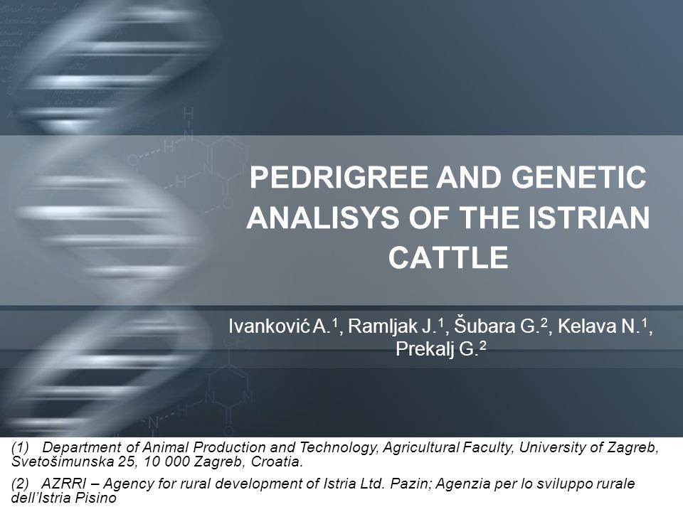 PEDRIGREE AND GENETIC ANALISYS OF THE ISTRIAN CATTLE