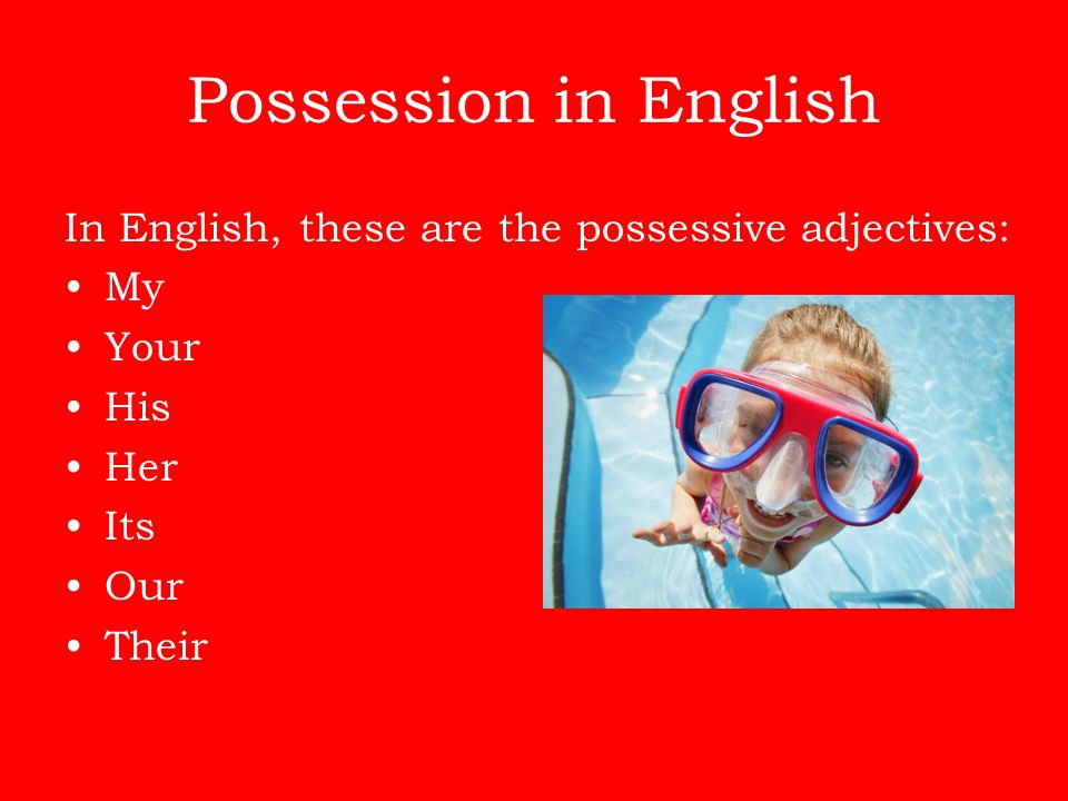 Possession in English In English, these are the possessive adjectives:
