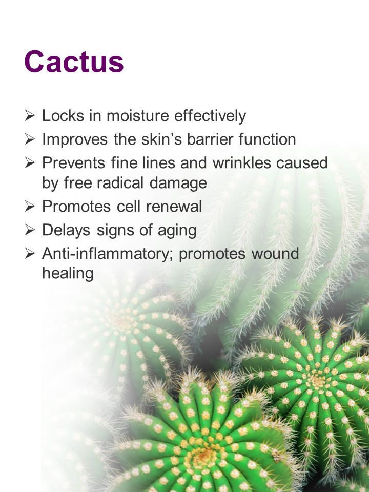 Cactus Locks in moisture effectively