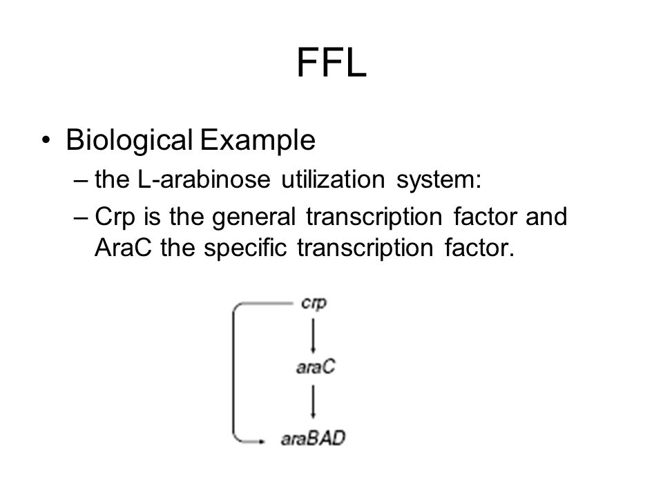 FFL Biological Example the L-arabinose utilization system: